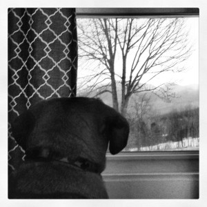 "Petey also enjoys contemplating his ""job with a capital J"" while vacationing in the White Mountains."