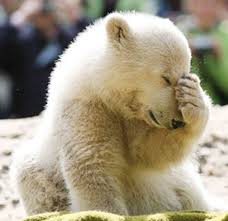 Polar bear facepalm. Go U Bears!