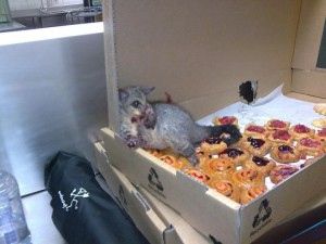 I could've fallen into a box of pastries like this poor little guy...but I didn't. Win!